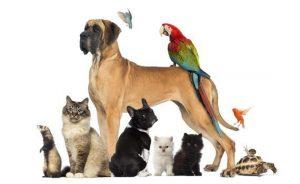 Pet Animal Name Selection